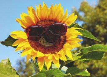 Nos conseils d'experts pour bien choisir vos lunettes de soleil