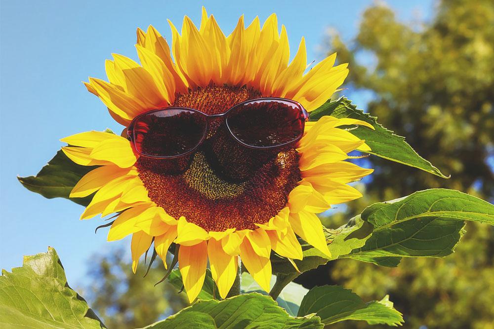 Nos conseils pour bien choisir vos lunettes de soleil pour l'été