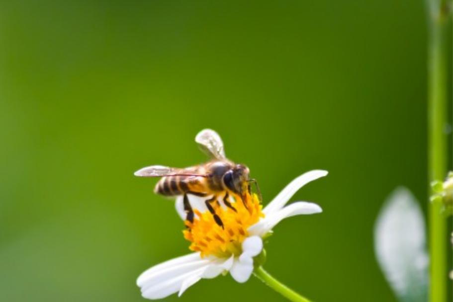 En été, attention aux piqûres d'insecte